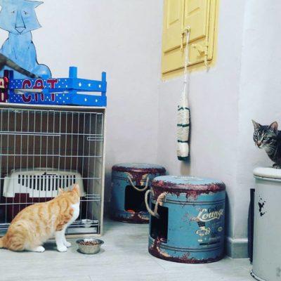 Taller, espacio de la CatSHOP... by ADiRA